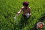 W Sumatra Strives to Increase Gogo Rice Land