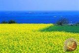 Korea pertimbangkan bebas visa untuk wisatawan Indonesia ke Pulau Jeju
