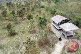 BNPB siapkan bibit pohon tahan api