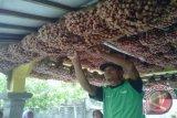 Bantul targetkan tanaman bawang organik 190 hektare
