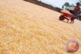 Tahun ini, Bulog bangun enam unit penyimpanan jagung, dilengkapi mesin pengering