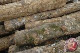 Polisi tangkap oknum anggota BPD pencuri kayu jati di OKU
