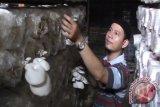 Budidaya jamur di Palembang bisnis menggiurkan
