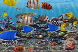 Sulut ekspor ikan hias hidup ke Bangkok