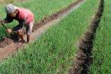 500.000 Indonesian Farm Families Change Livelihood Every Year