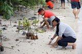 KolaborAKSI WWF Indonesia, Earth Hour Lampung dan Indorunners Tanam 2.000 Mangrove