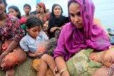 Derita Pilu Pengungsi Rohingiya Arungi Lautan