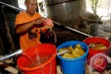 Essential Oil as Solok Municipality Main Commodity
