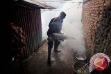 Legislator minta Dinkes Kolaka lakukan penyemprotan sarang nyamuk
