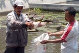 Musim hujan, permintaan benih ikan di Temanggung tinggi