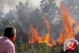 Kebakaran Di Tolitoli Ludeskan Ribuan Pohon Cengkeh