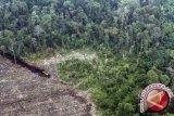 Indonesia miliki peta konservasi gambut pada 2016