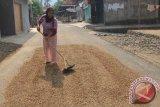 Desa Indramayu penghasil kopi terbaik di Sumsel