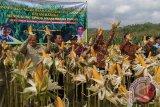Pemkab diminta beri subsidi premi asuransi pertanian