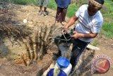 Warga Solok Selatan kesulitan air bersih akibat kekeringan