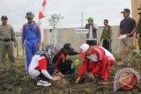 Wabup Sukamara: Budayakan Menanam Pohon Untuk Bangun Ekosistem
