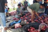 Sejumlah petugas 'binda' sedang menyamakan berat daging dengan menambahkan sejumlah potongan daging atas puluhan tumpukan daging kerbau yang disebut 'gugunan' pada kegiatan 'marbinda horbo' di Hariaranagodang Simaungmaung, Kelurahan Hutatoruan IX Tarutung, Taput, Rabu (30/12). Foto Antarasumut/Rinto Aritonang.