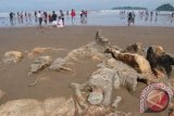 Tourist Visits in Padang is Still High on Two Weeks after Eid: Official