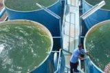 Sempat Mangkrak, Zul AS Kembali Akan Lanjutkan Proyek Air Bersihnya