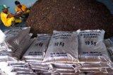 Mahasiswa UGM mengolah gulma menjadi pupuk