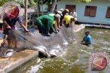 Warga Sigi Gemari Budidaya Ikan Lele