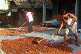Ekspor kakao Lampung 152 ton