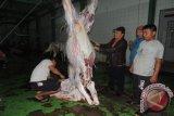 Pemprov Sulut pasok daging sapi penuhi kebutuhan Ramadhan