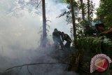 Pemanfaatan hutan ancam keanekaragaman hayati di Kalteng