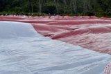 Pengibaran Bendera Terpanjang Di Raja Ampat Pecahkan Rekor Muri