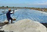 Menperin Airlangga dorong peningkatan kualitas garam petani