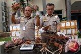 Pemerintah tingkatkan pencegahan eksploitasi lobster dan kepiting