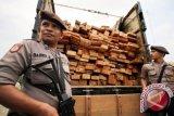 Polisi Amankan Puluhan Kubik Kayu Ilegal