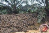 Pengolahan delapan juta ton limbah peremajaan sawit Muba butuh dana besar