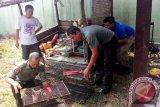 Warga Sampit Serahkan Elang Bondol Dan Kukang Ke BKSDA