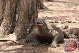 Asita bilang UNESCO soroti masalah sampah wisata TN Komodo