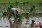Para Petani Mulai Siap Menanam