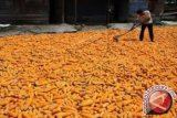 Luas tanam jagung Parigi Moutong ditarget 8.000 hektare