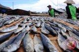 Temuan Ikan Mengandung Formalin, DPRD: Pemkab Agam Ambil Tindakan