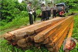 Dishut Sulbar Tekan Kasus Illegal Logging