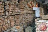 Harga Telur Di Kendari Stabil Jelang Imlek