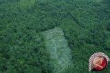 Dishut: Dilarang kelola hutan lindung tanpa izin