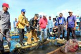 Pasaman Barat Miliki Potensi Ikan Kerapu Ekspor