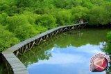 Kawasan mangrove teluk kendari jadi objek wisata