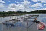 UGM budidaya ikan teknologi microbubble generator