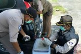 PPN Sungailiat periksa ikan dari Palembang