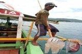 Ubur-ubur Jadi Berkah Pantai Wisata Lampung