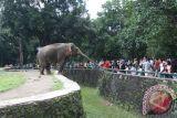 Kebun binatang Beijing gandeng Afrika untuk perlindungan hewan