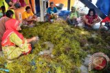 WWF Dorong Optimalisasi SDA Pesisir