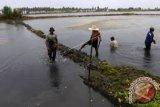 DKP kembangkan budi daya tambak ikan air tawar