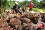 Investasi kelapa sawit dorong ekonomi Sultra